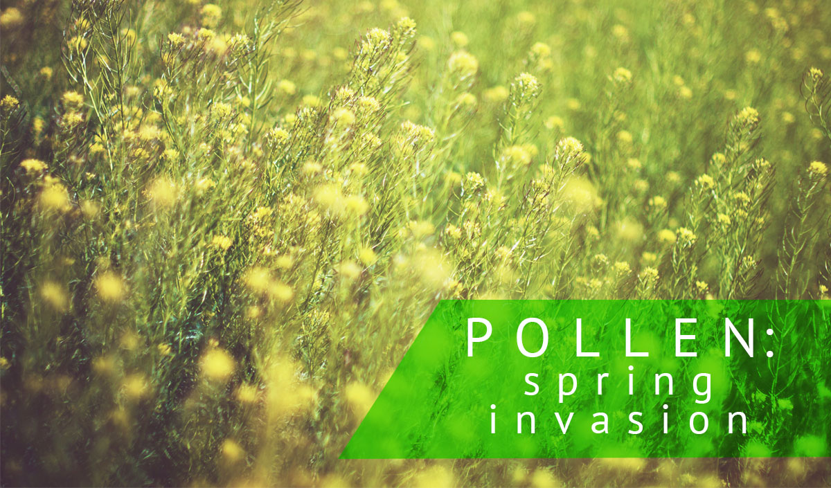 eliminate pollen from your home